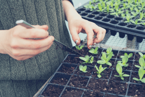 a person planting seedlings in a seed starter kit