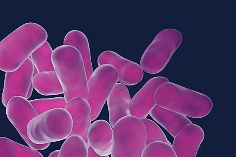 microscopic picture of purple dyed probiotics