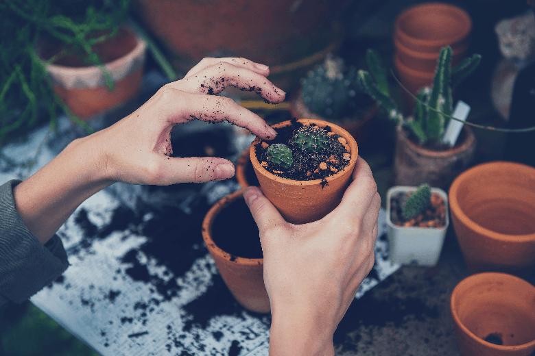 a person putting soil in a succulent pot