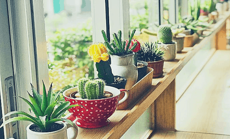 Succulents sitting in a sunny windowsill