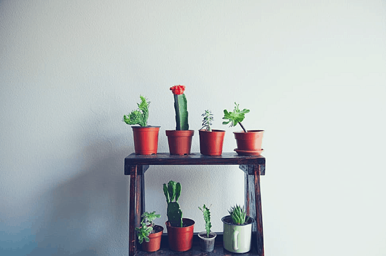 8 succulents sitting on a small shelf