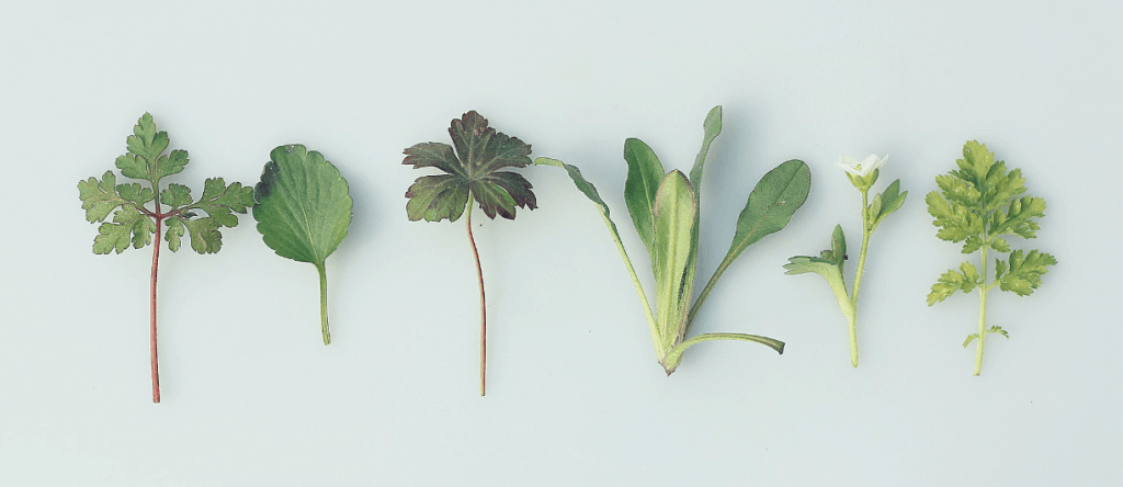 Clippings of 6 different plants