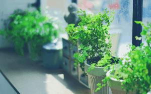 plants in a windowsill
