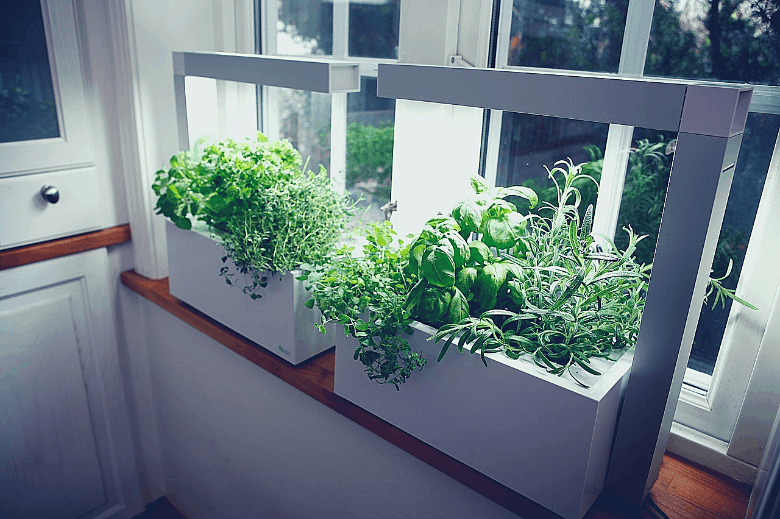 Herbs with artificial lights