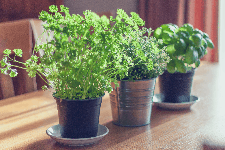 Three herbs on a table