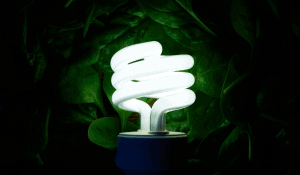 light bulb and plants