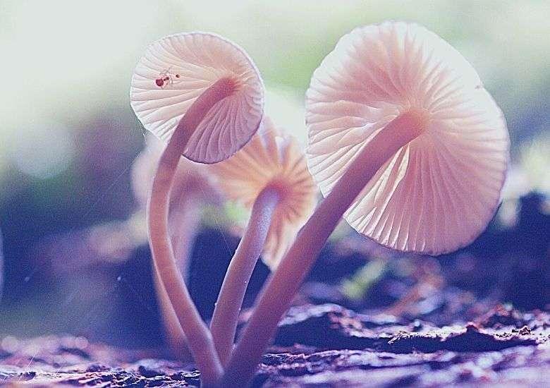 fruiting mushrooms