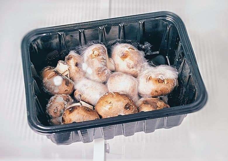 rotten mushrooms