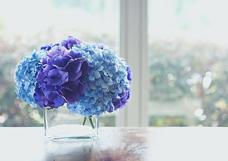 purple and blue flowers