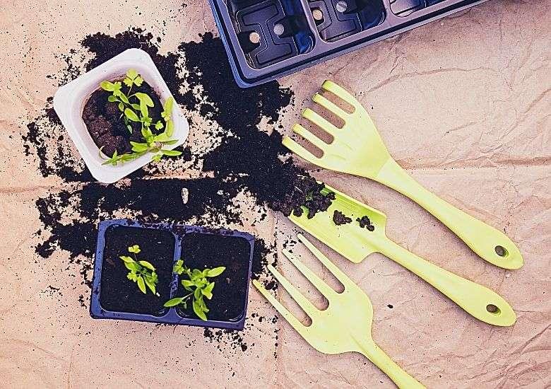indoor seed kit